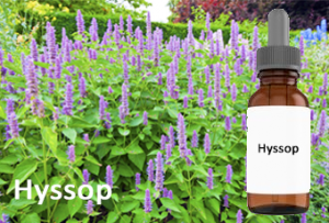 Hyssop essential oil